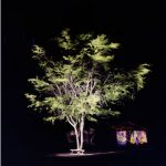 Árvore e Casa Fotografia 100 x 100cm, 2004-5