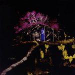 Árvore Rosa Fotografia 100 x 100cm, 2004-5