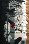 Felipe Yung Pelúcia Sakura Acrílica sobre pergaminho de seda japonesa 200 x 60 cm, 2009