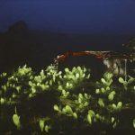Renan Cepeda Cactus Fotografia 100 x 100 cm.