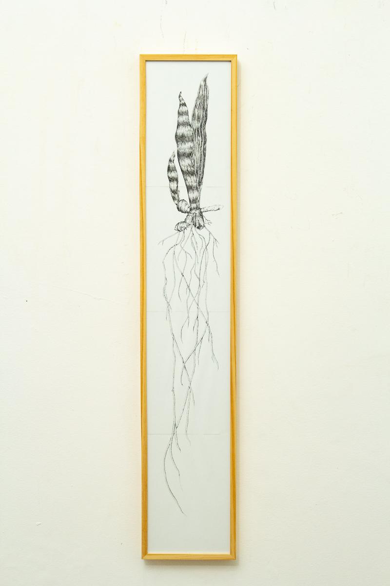 Vítor Mizael, Sem título, Nanquim sobre papel, 121 x 23 cm, 2016-18