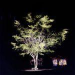 Renan Cepeda Árvore e Casa Fotografia 100 x 100 cm.