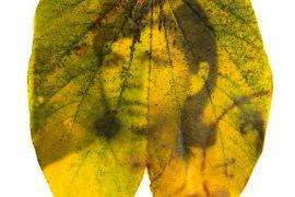 Christus Nóbrega, ÁRVORE GENEALÓGICAS, Impressão jato de tinta sobre folhas colhidas no outono, 35 x 35 cm, 2014