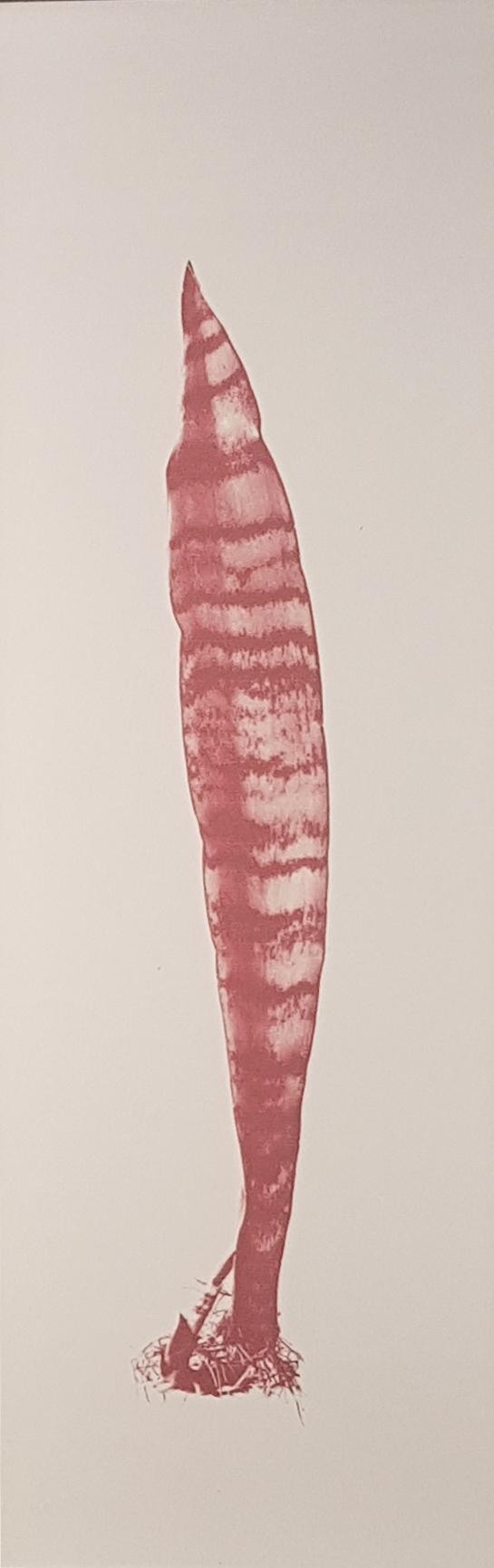 Christus Nobrega, Sudário - Espada de são Jorge, Impressão jato de tinta com tinta feita de sangue, 65 x 30 cm, 2013/14