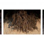 Patrícia Gouvêa, Negro, Impressão fotográfica em papel de algodão, 43 x 65 cada (tríptico), 2017, Tiragem 3