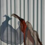 Adriana Lerner e Eduardo Rezende, Spanish Dancer I, Papel Photo Rag 380g - Hahnmuhle, 120 x 85 cm, 2018, Tiragem 4 + 1 PA