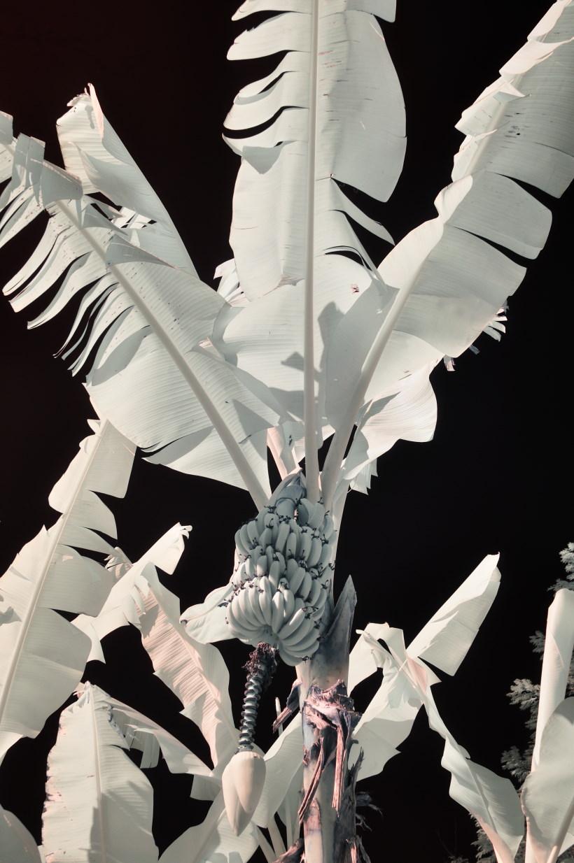 Renan Cepeda, Sem Título - Série Novo Normal, Velho Essencial, Fotografia, 150 x 100 cm, 2020, Tiragem 1 de 5
